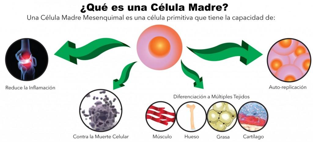 Células madre tipos