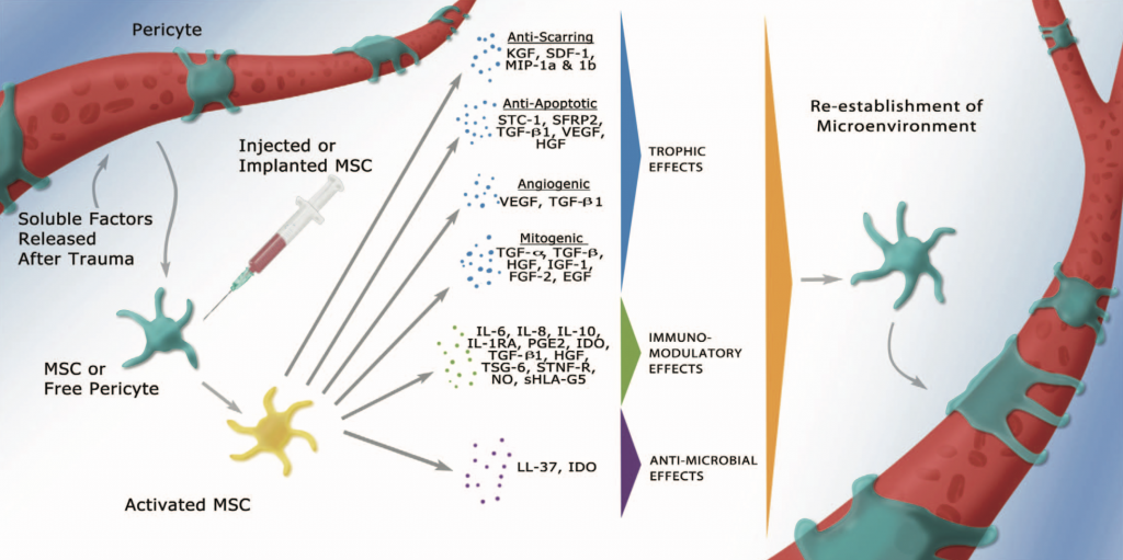 Células madre funciones